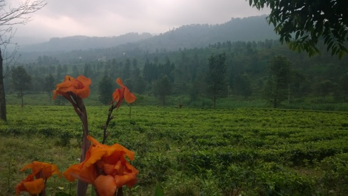 Tea plantations at Puncak